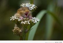 animals haha / by Carly Losee