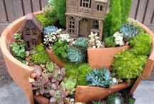 Miniature and Fairy Gardens / Tiny plants. Miniature Garden Ideas / by Ginger Edwards