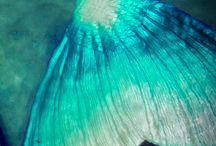 Under the sea / Mermaids! Ocean!!  / by morgan vangieson