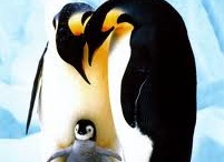 """Penguins!!! <("""") <3 / by Rae Pare"""
