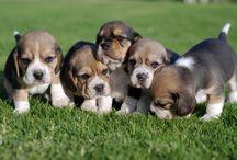 Puppies make me smile / by Danita Harris