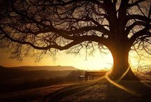 Trees  / Amazing trees, the lungs of our planet  / by Anna Rose