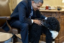 Pet Lovers for Obama / by Barack Obama