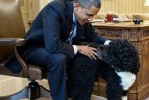 Pet Lovers for Obama / by Barack Obama