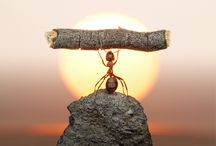 """Amazing Ants! / Ants really ARE amazing! They really know all about """"working together""""! Hardest working little creatures of all! I have great respect for them. / by noreen scully"""