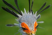 Secretary Birds / by Steve Garufi