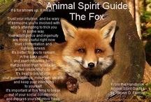 animal spirit guides / by Melissa Ann