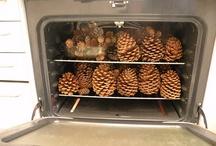 pine cones / by Teresa Johnson Paul