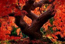 Amazing Autumn! / by Maryann Robertson  McAndrews