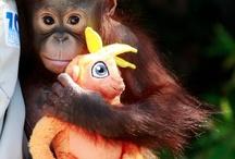 monkey ♡♥ / by Kattie Heisey