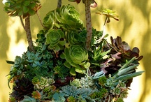 Succulents / by Pat Cramer Kennedy