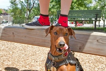 Doggies and Other Fuzzy Friends / Dogs are an important part of the Sock Dreams Lifestyle. Meet our furry friends! / by Sock Dreams