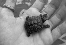 """Am I not Turtley enough for the turtle club, Turtle, Turtle"" / My favorite animal of all time! / by Colby Hamilton"