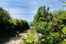Nantucket Beaches / by Century House Nantucket