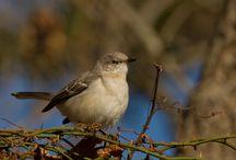 Jersey Birds... / by Loralea Kirby