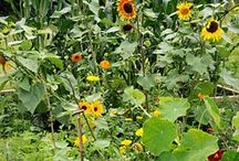 Gardening Tips / by Beth Summerford