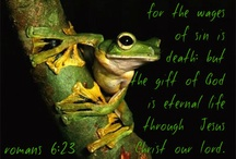 Frogs  / by Kathy Seelig