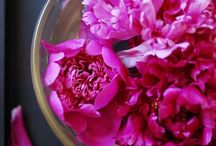 color palette: fuchsia / by Jessica Swift