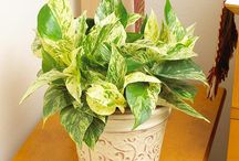 Hard to kill houseplants / by Aerin Miller