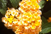 Flower / by Tartas Eu