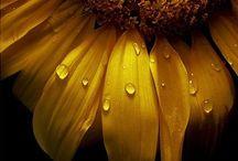sunflowers / by Marlene Keller