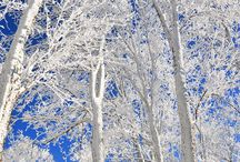 winter / by Tina Tipps