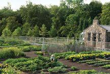 Dream Gardens / by Margaret Van Damme