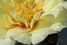 Flower Arranging in JG style / by Jes Gordon