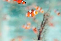Saltwater fish / by cristian palma