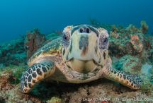 Sea Turtles / by Gina Latner