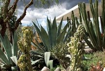 Prickly cactus / by Marsha Campbell-Dunbar