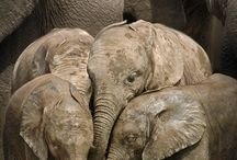 Olyphants for everyone / by Blake Frase
