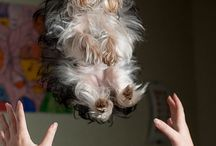 Furry baby / by Colleen McClure