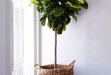 Plants / by Ashleigh Flynn