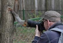 Chipmunk,Squirrel,&Ground Squirrels / by Tami DeVore