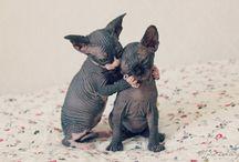 Pets / by Carollee Lockwood