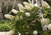 Gardens / by Patricia Kennedy