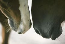 horse pictures i like ♥ and a donkey or 2 / by Ruth Tidwell