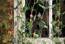 plants / by Melanie Conrad