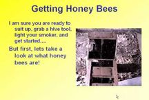 Bee Keeping / by Tracy Balcius