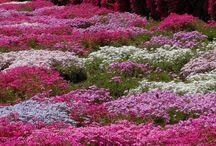 Landscaping & Gardens / by Jessie Lingafelt Sadler