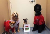 Pet Friendly Places In Cincinnati / Establishments that are pet friendly in the Cincinnati, Ohio area / by Beechmont Pet Hospital