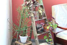 Indoor Plants / by Shepherd's Needle