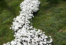 garden ideas / by Tonya Stout