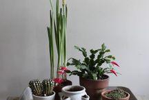 Jardinagem / by Ângela Nunes