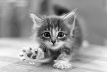 cats / by Kokkie Webwinkel voor (b)engeltjes