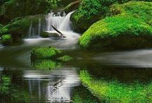 Oregon and Washington / by Hilary Felsing Hall