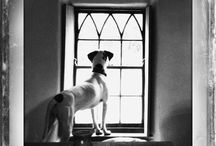 Full Of Pointers / A board dedicated to pictures of my two Pointers - Coco and Joey. / by Pet Sitters Ireland