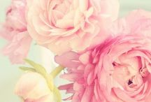 Flowers/Garden / by Alicia Crain