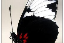 All Things Black & White / by LeeAnn Ohanesian